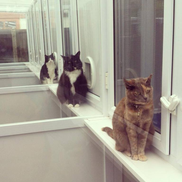 photo of cattery